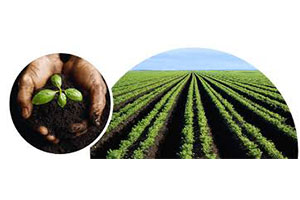 The production of organic fertilizer has many benefits for vegetable planting